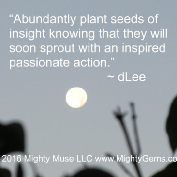 seeds of now